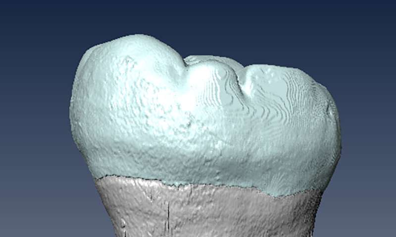Ancient molar points to interbreeding between archaic humans and Homo sapiens in Asia