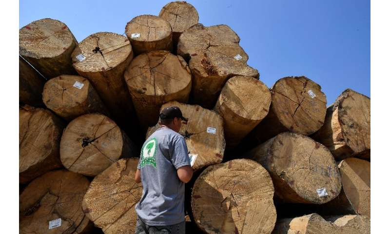 An employee at Rubens Zilio's sawmill inspects logs