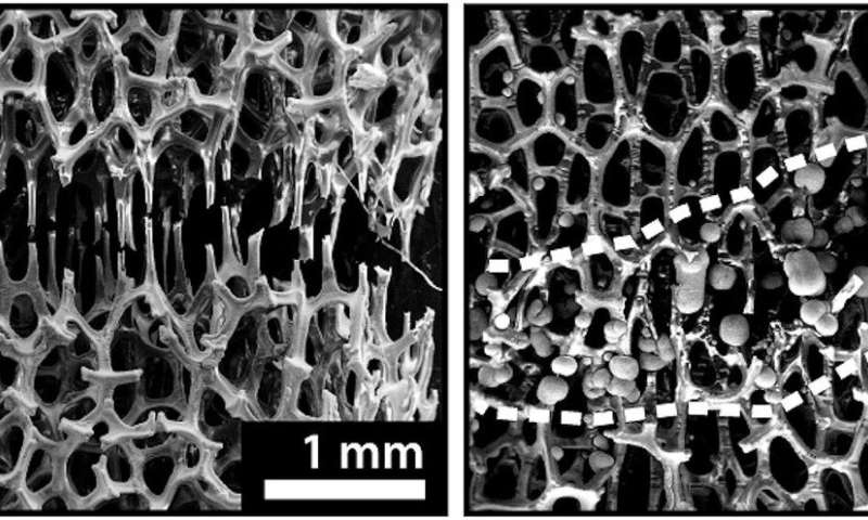 Engineers develop bone-like metal foam that can be 'healed' at room temperature