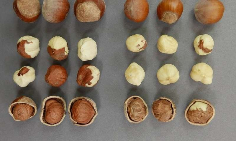 A new hazelnut has cracked its competitive marketplace