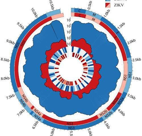 A new methodology for sequencing viruses