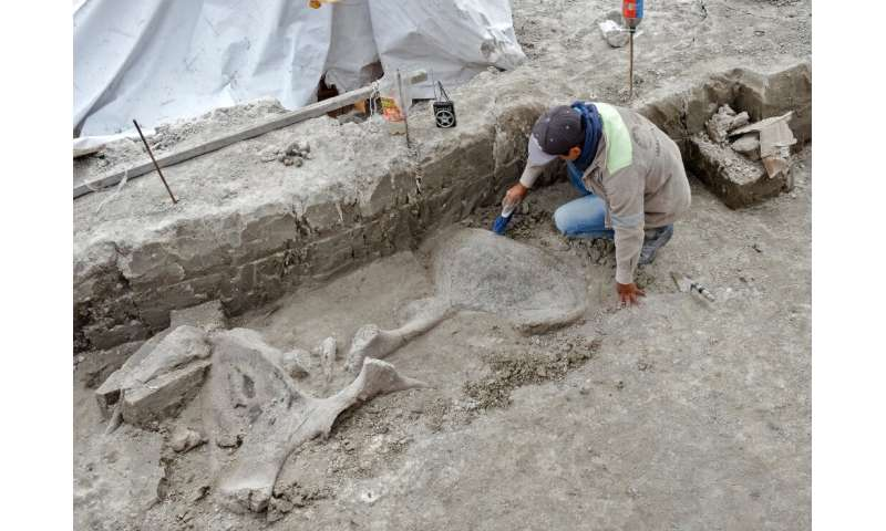 An expert works with mammoth bones discovered in Tultepec, Mexico, in this handout picture released by the country's National In