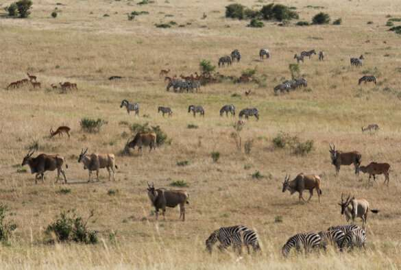 Animal friendships 'change with the weather' in the Masai Mara