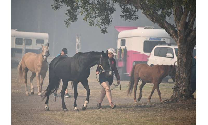 Animals are being taken out of the path of the fires