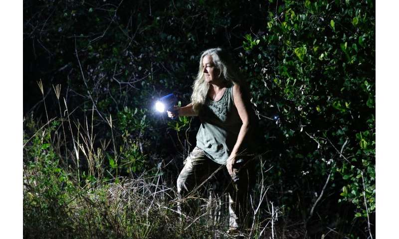 Anne Gordon Vega, a contractor for the Florida Fish and Wildlife Conservation Commission, looks for Burmese python in the Evergl