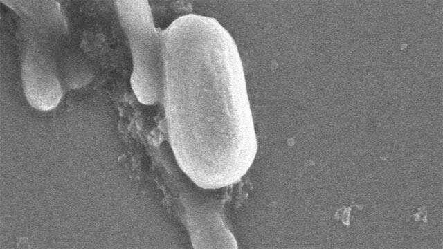 Antimicrobial paints have a blind spot
