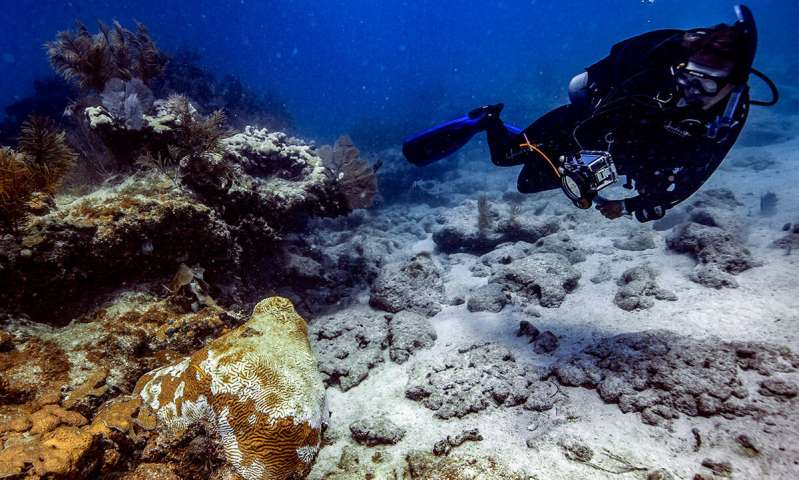 An update on the ongoing coral disease outbreak in Florida