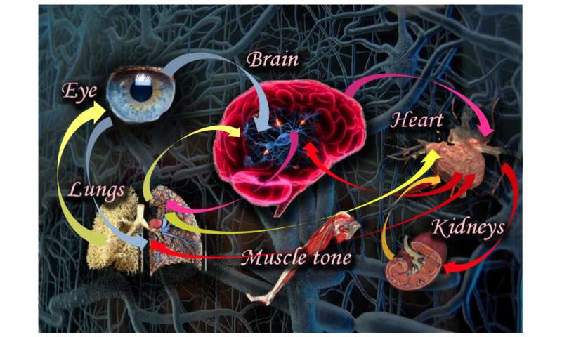 Applying a network perspective to human physiology
