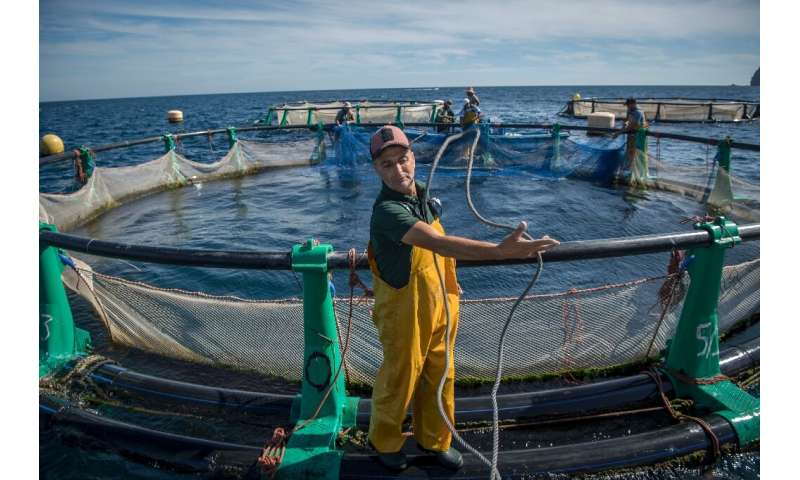Aquaculture offers hope to struggling fishermen in the Moroccan city of M'diq