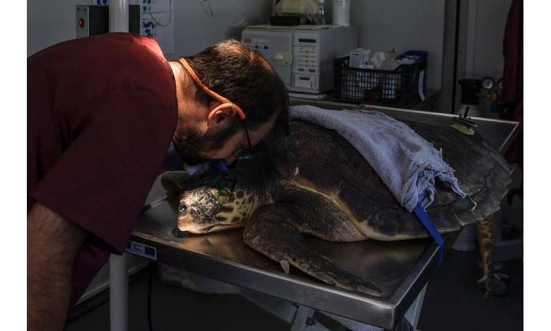 Archelon rescue centre for injured turtles receives some 70 new cases every year