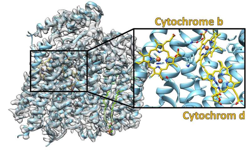 Architecture of a bacterial power plant decrypted