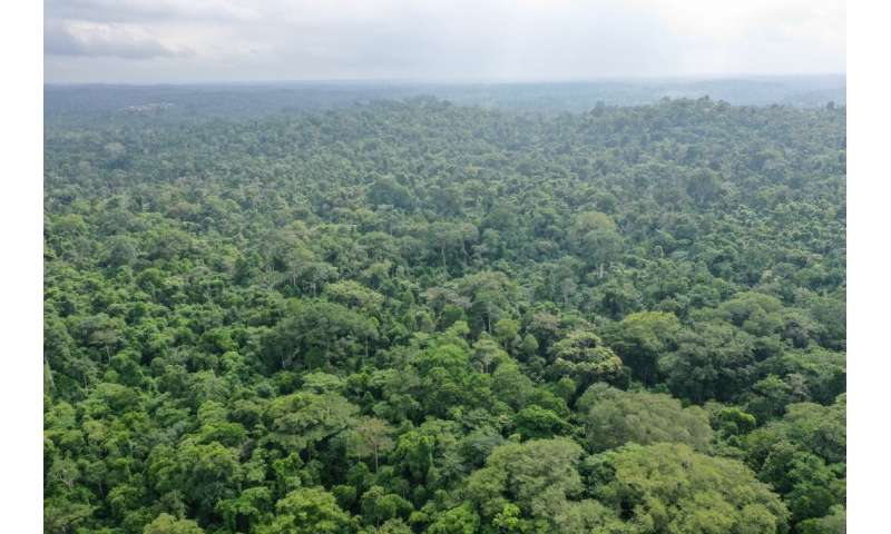 A report issued earlier this week said massive reforestation might help fight climate change