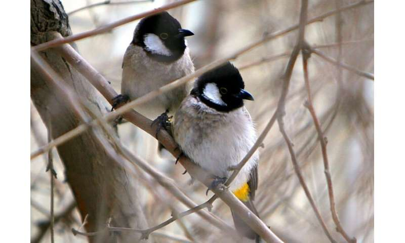 Intelligent males may make female birds swoon: study
