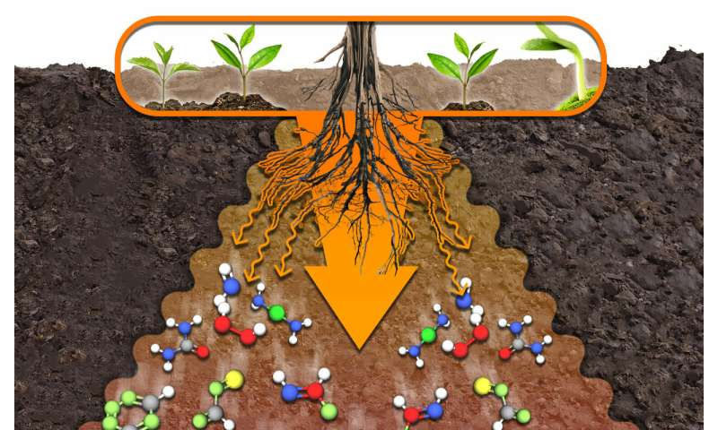 A RUDN Agrochemist Accelerated the Speed of Organic Substance Decomposition in the Soil 2 Times