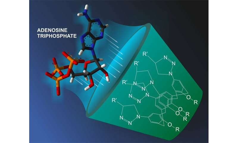 A RUDN Chemist Together with Colleagues Created Traps for Energy Source Molecules in Cells for the First Time