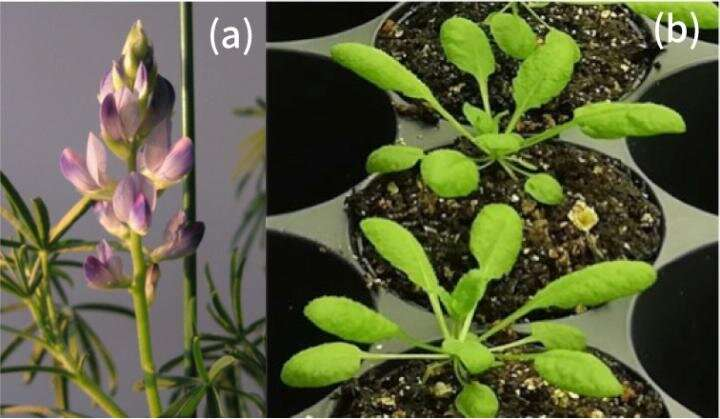 A scientific approach to recreate metabolic evolution in plants