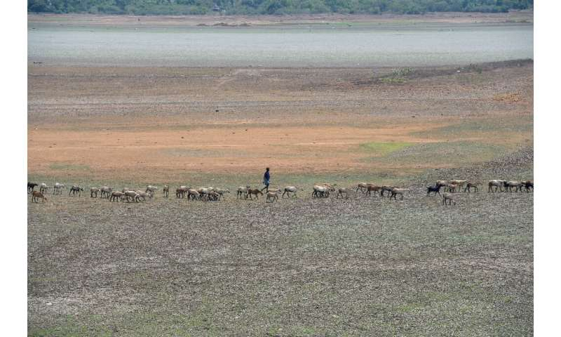 A shepherd and his flock walk across the dried out Puzhal reservoir on the outskirts of Chennai, which has been hit by drought a