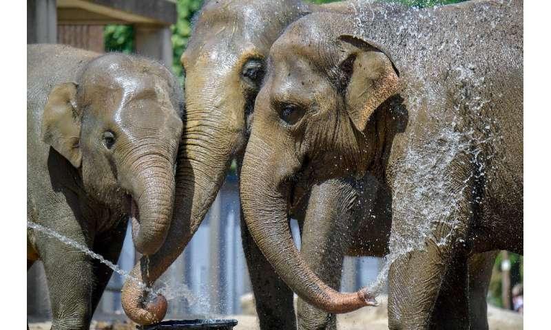 Asian elephants on June 25, 2019 in Berlin keep their cool