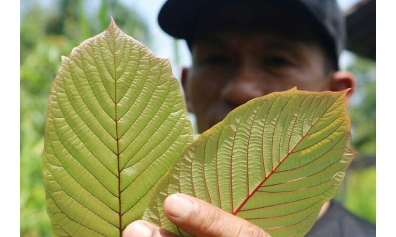 As many as five million Americans use kratom and that number is growing, according to the American Kratom Association