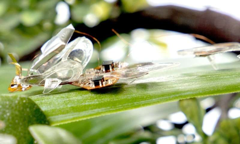 A soft robotic insect that survives being flattened by a fly swatter