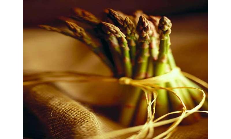 Asparagus: A tasty spring veggie that boosts gut health