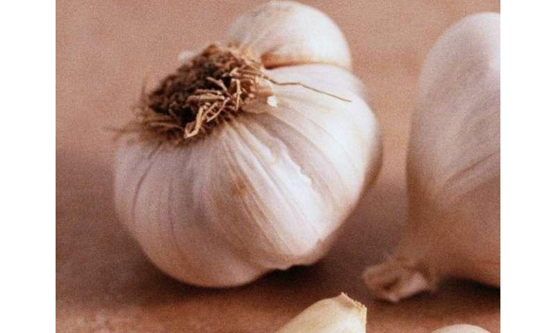 A tasty, good-for-you treat: roasted garlic