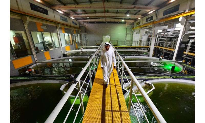 """At Fish Farm, says Bader bin Mubarak (pictured), they came up with """"the idea of dark water that resembles deep water, a str"""