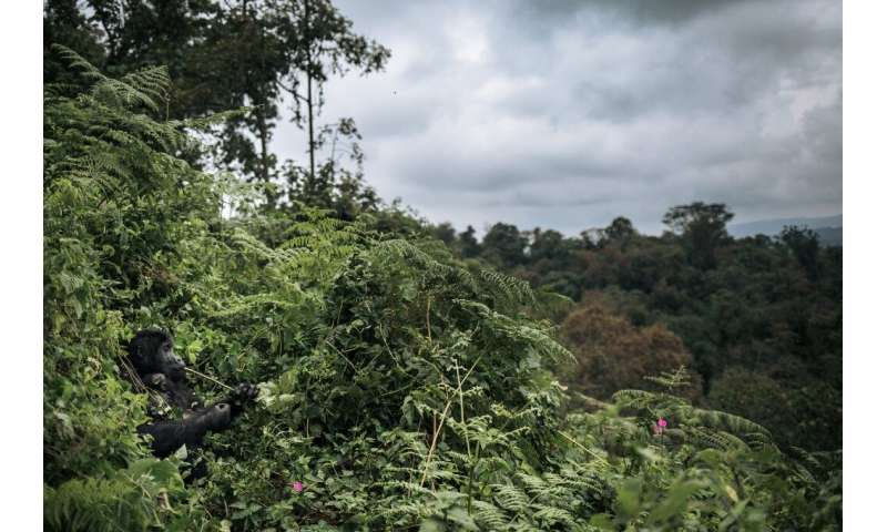 A third of tropical flora in Africa is threatened, including in southern Democratic Republic of Congo