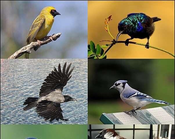 Aussie birds turn down their thermostat to save energy in winter
