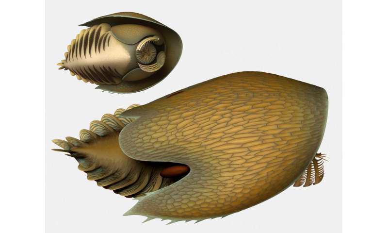 A voracious Cambrian predator, Cambroraster, is a new species from the Burgess Shale
