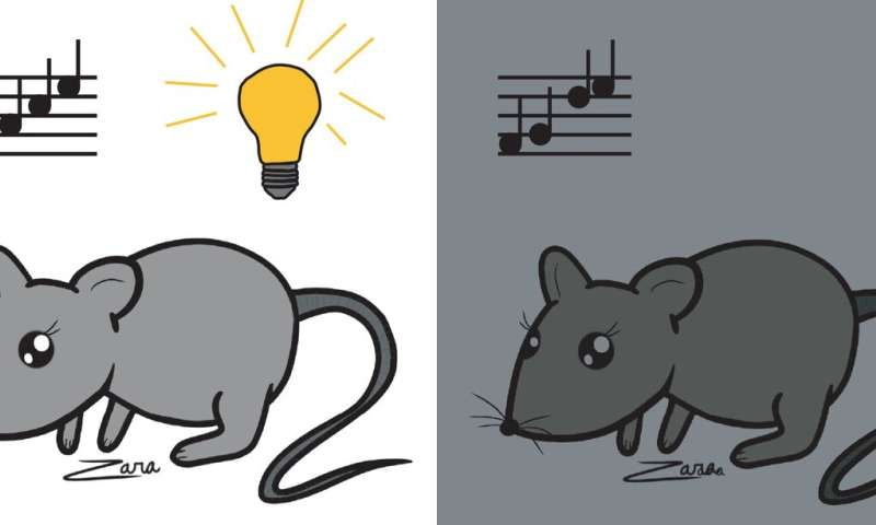 A week in the dark rewires brain cell networks and changes hearing in adult mice