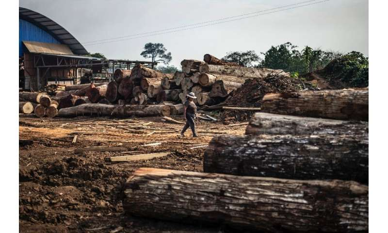 A woman walks amid logs stacked near s sawmill at Puerto Maldonado