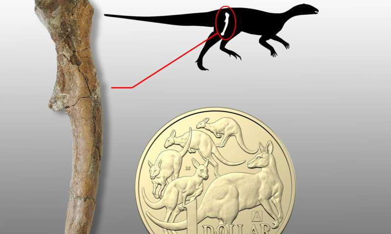 Baby dinosaurs found in Australia