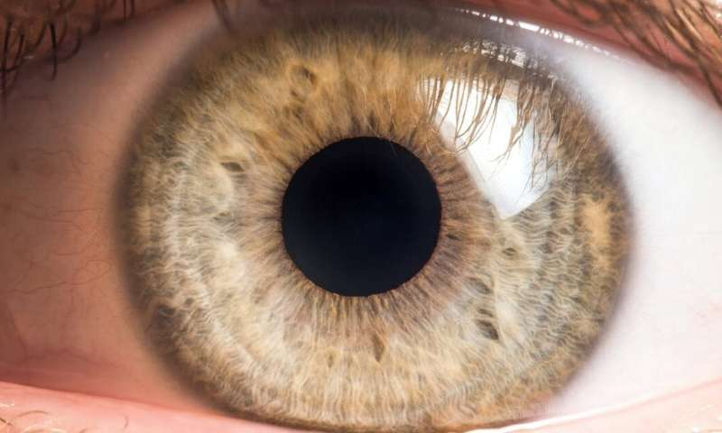 Bacteria live on our eyeballs -- and understanding their role could help treat common eye diseases