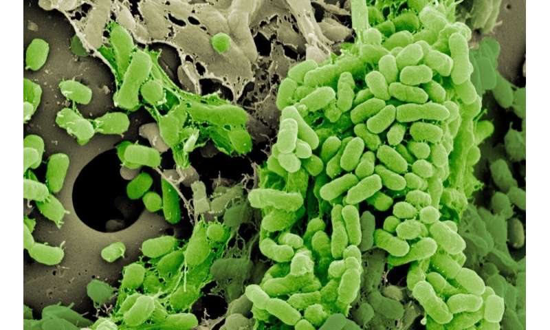 Bacterial lifestyle alters the evolution of antibiotic resistance