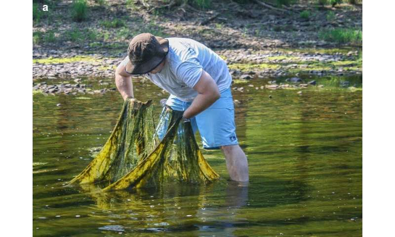Bad Blooms: Researchers review environmental conditions leading to harmful algae blooms