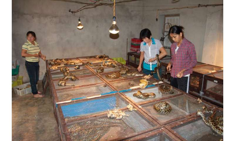 Banning exotic leather in fashion hurts snakes and crocodiles in the long run