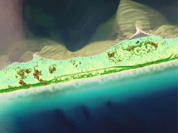 Barrier island sand dunes recover at different rates after hurricanes