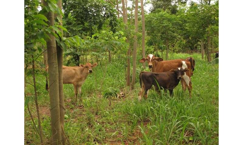 Bean tree plan to protect Amazon