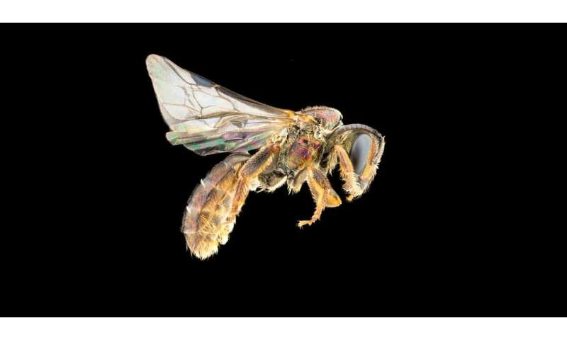 Bee biodiversity barometer on Fiji
