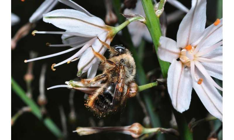 Bee diversity critical to world's food supply