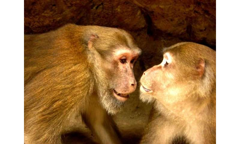 Behavioral scientists test biological principle on free-living Assamese macaques