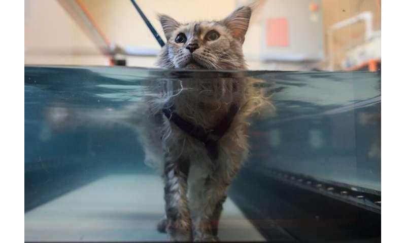 Bess, an arthritis sufferer, is put through her paces on an underwater treadmill