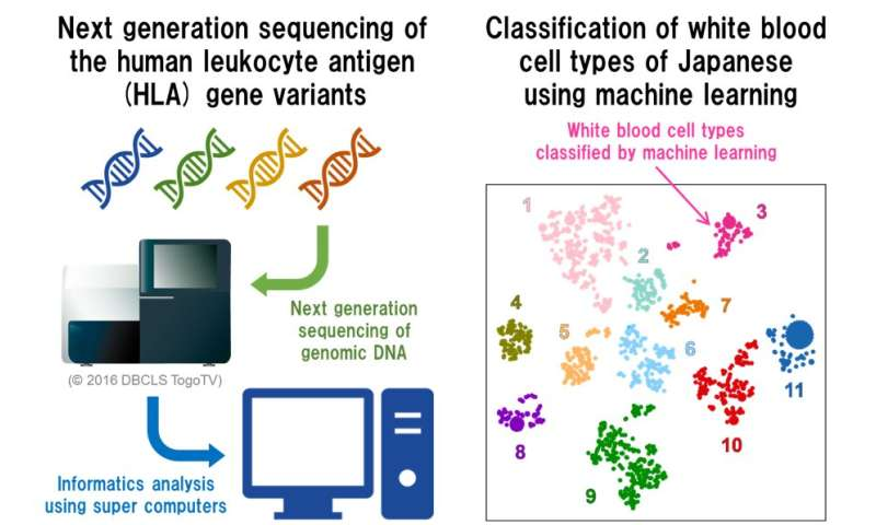 Big data provides clues for characterizing immunity in Japanese