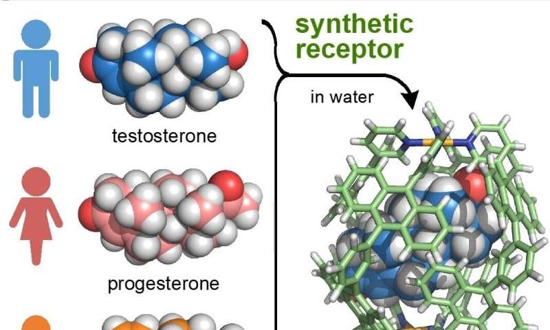 Biomimetics: Artificial receptor distinguishes between male and female hormones