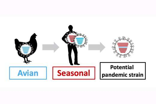 Bird flu shuffle probes viral compatibility