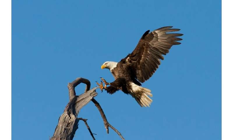 bird landing