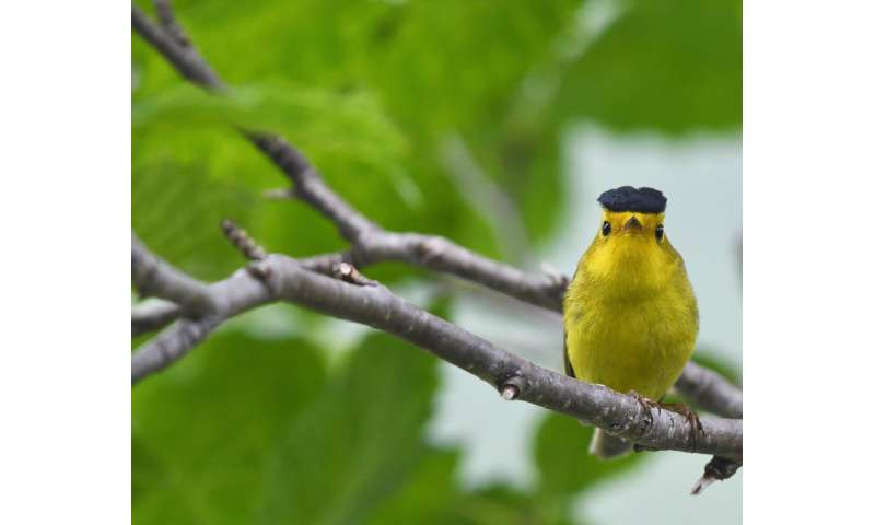 Bird migration timing skewed by climate, new research finds