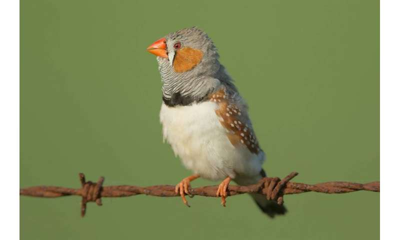 Birds perceive 'warm' colors differently from 'cool' ones