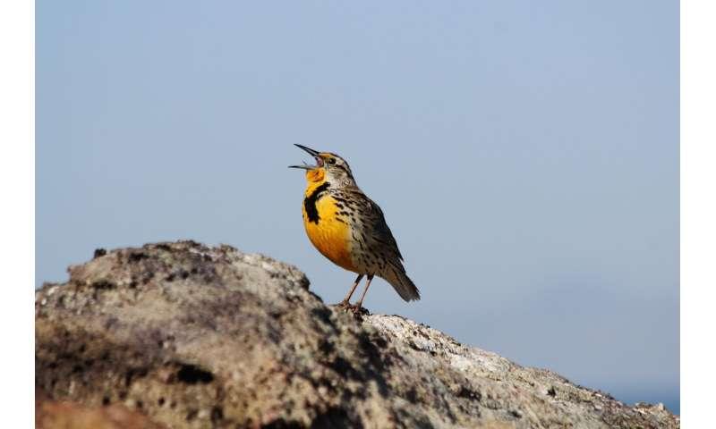 Birds' surprising sound source
